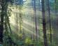 Nature and Development