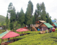 HOMESTAY ALLURING TOURISTS