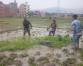 Hard to do ropai in Bhaktapur