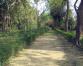 Enticing beauty of Dhakeri botanical garden