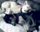 Ensuring Street Dogs' Welfare