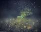 Beauty of  fireflies