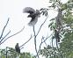 Twilight's Birds