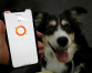 South Korean firm's smart dog collar tells owners what's in a bark
