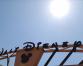 Disneyland 'Tiki' birds among vast theme park auction