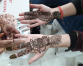 Mehendi Convention 2019 begins