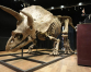World's biggest triceratops sells for $7.7 million in Paris