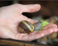 Would you wash with snail slime soap?