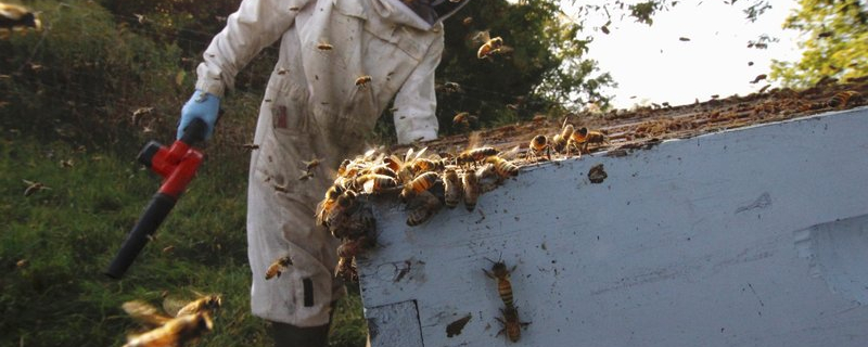 'Crazy' beekeepers determined to make it in tough times