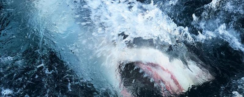 Virus-quieted oceans open window for Shark Week researchers