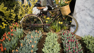 Florists to duke it out in Philly at Interflora World Cup