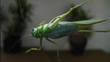 Grasshoppers take Vegas by swarm, disrupting weather radar, tourism