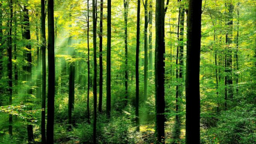 Nepali Forests in Food Security