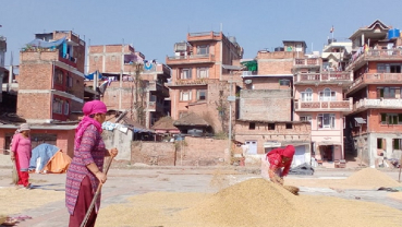 Women sun drying the husked rice paddy in Bhaktapur