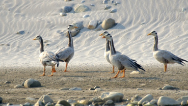 Koshi Tappu, paradise for bird lovers