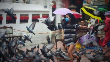 Pigeons' Plea