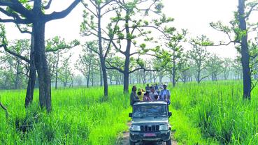 Night Jeep Safari in Sauraha
