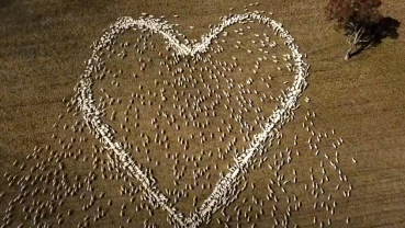 Australian mourns beloved aunt with heart-shaped love ewes