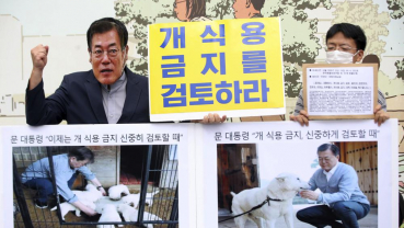 S. Korean leader's review of ban on eating dog meat welcomed