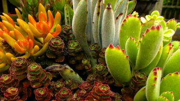Houseplants become more active as days get longer