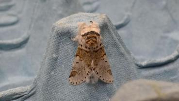Moth on my diary