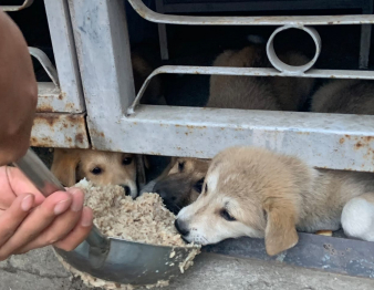 He chose to risk his life to feed street animals and people when most people confined themselves to their homes