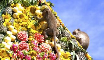 Monkey buffet in Thailand