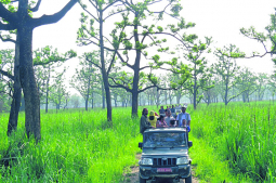 Night Jeep Safari in Sauraha
