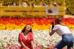 California's Carlsbad Flower Fields welcome visitors with full blooms
