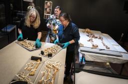 Skeletons of related Viking-era men to reunite for exhibit