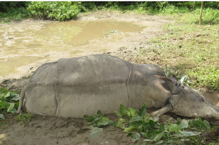 Concern over the increasing death of Rhinos