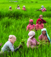 Should there be FDI in agriculture?