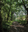 Restoring forest requires local action
