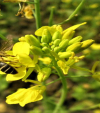 Save the bees, support the beekeepers