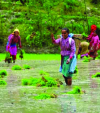 How do we achieve sustainable agriculture growth?