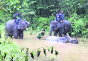 Flood washes away Chitwan rhinos to India