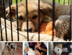 Kathmandu has 23,000 street dogs!