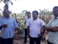 Storm, rainfall damage banana crop worth Rs 18 million in Rupandehi