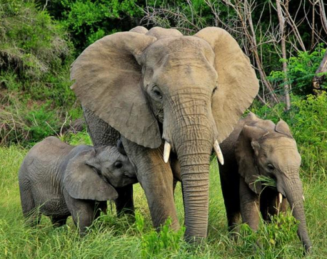 If You Love Elephants, Don't Ever Ride Them
