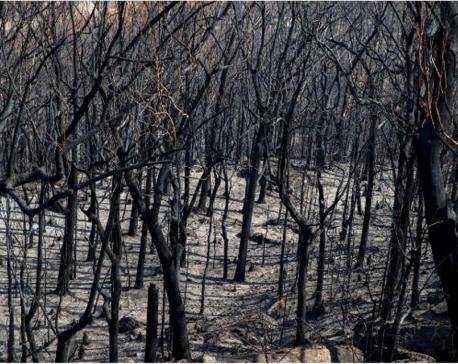 Heatwave and high winds threaten to reignite Australian wildfires