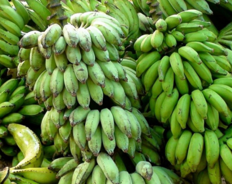 Demand for banning import of Indian bananas