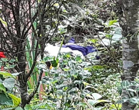 High court employee found dead