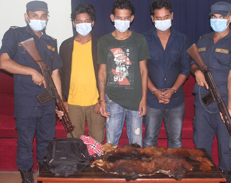 Three caught with red panda hides