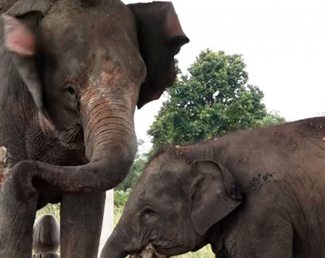 Experts highlight the need to develop appropriate plans and strategies to conserve wild elephants