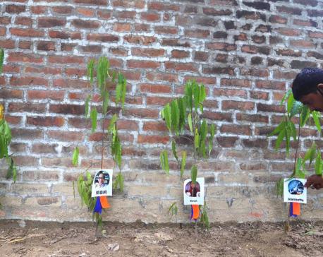 1000 Ashoka trees planted in Lumbini