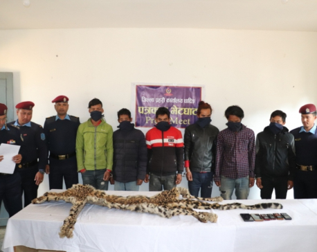 Six persons arrested on charge of smuggling tiger skins in Dhading