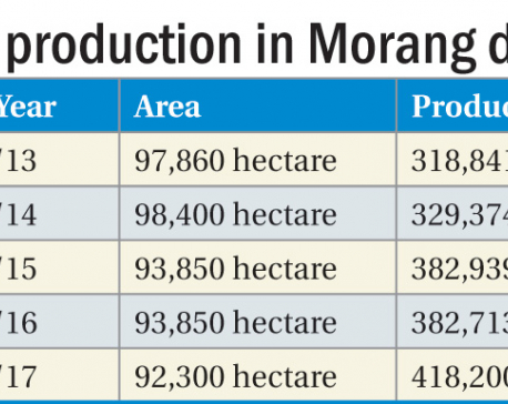 Paddy production in Morang highest in five years