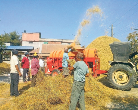 Farmers hit as authorities fail to fix prices for paddy