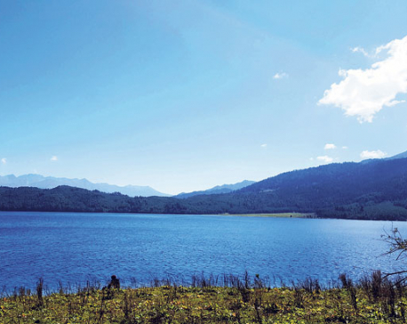 Magnificent Rara sans physical infrastructure