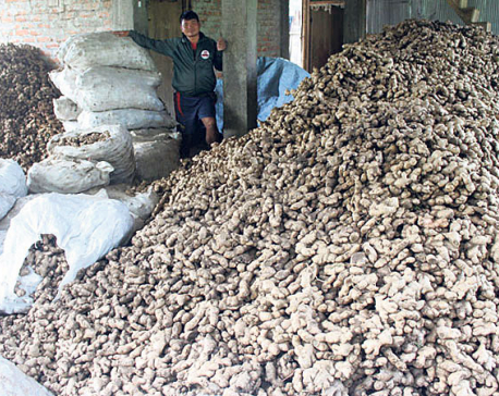 Ginger export to India affected yet again